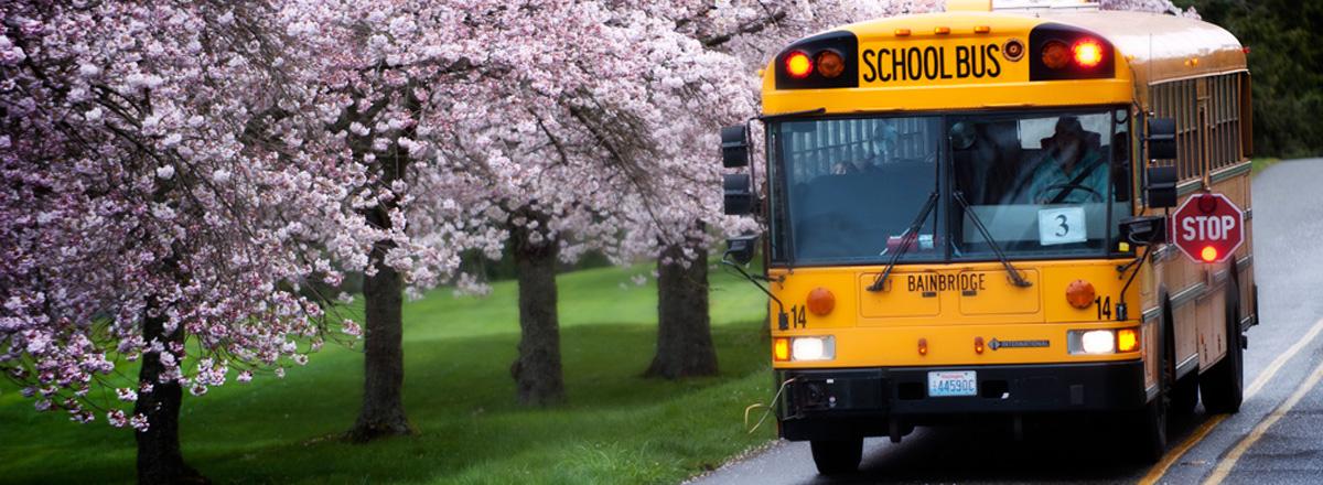 School bus with cherry trees on Bainbridge Island